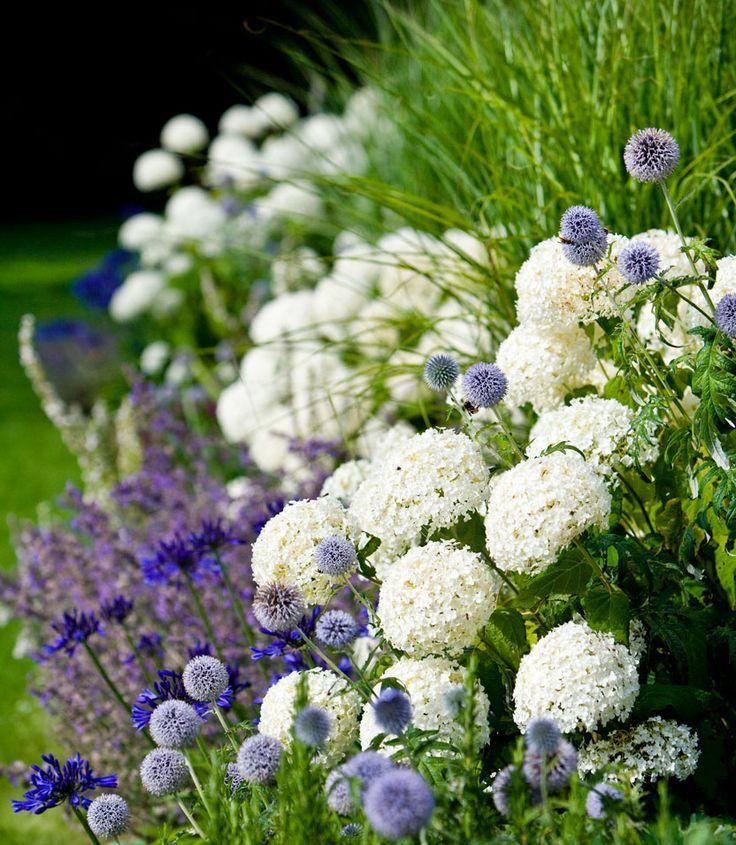 Sur un mixborder, des plantes telles que la sauge, l'agapanthe, l'hortensia, le mordovnik s'entendront parfaitement