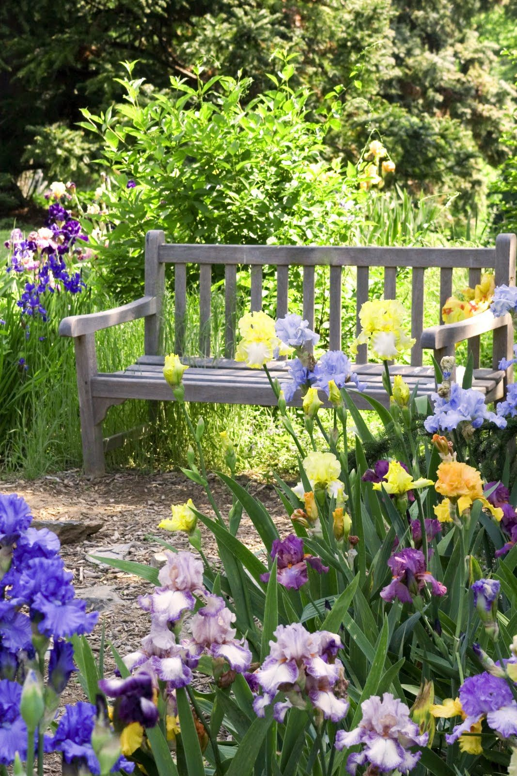 Les iris sont peut-être les fleurs les plus traditionnelles de leur chalet d'été.