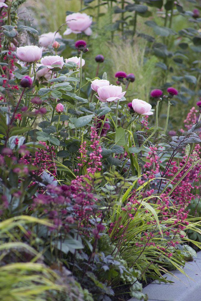 Il est difficile d'imaginer un parterre de fleurs de chalet d'été sans pivoines délicates.
