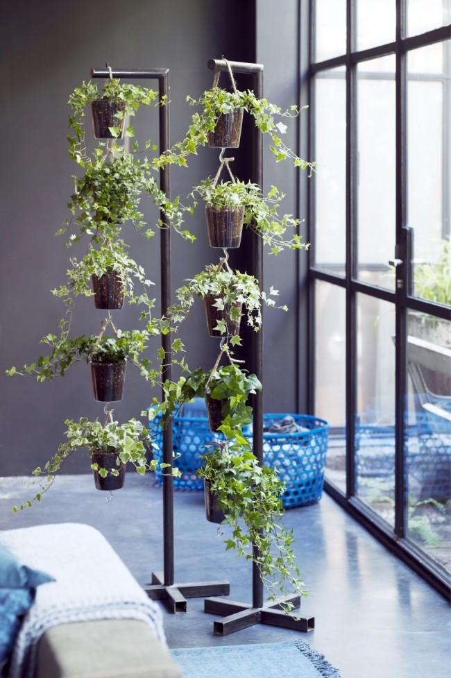 Ivy sera une merveilleuse décoration pour votre intérieur