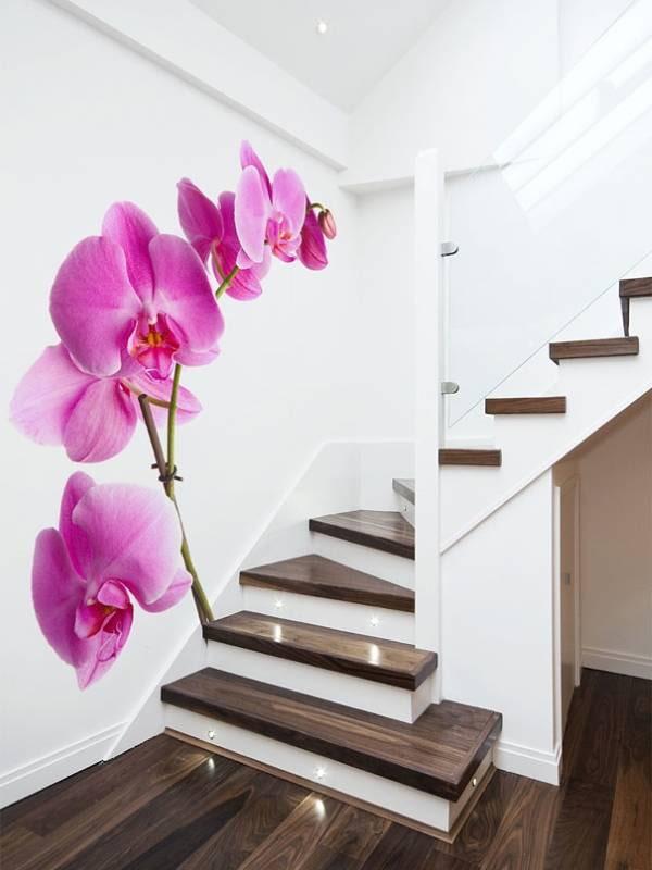 photos murales avec des orchidées