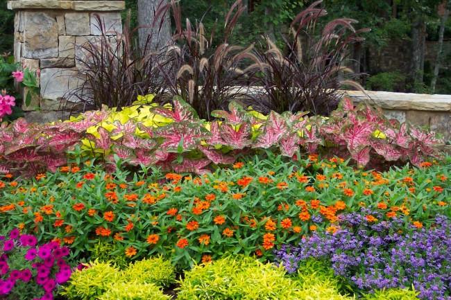 Disposition en couches de plantes dans le jardin