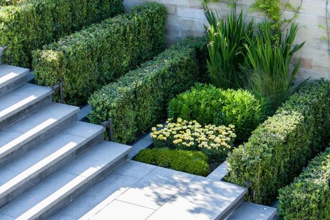 Buis et iris dans un aménagement paysager ultra-moderne : une idée pour planter des plantes de différentes hauteurs