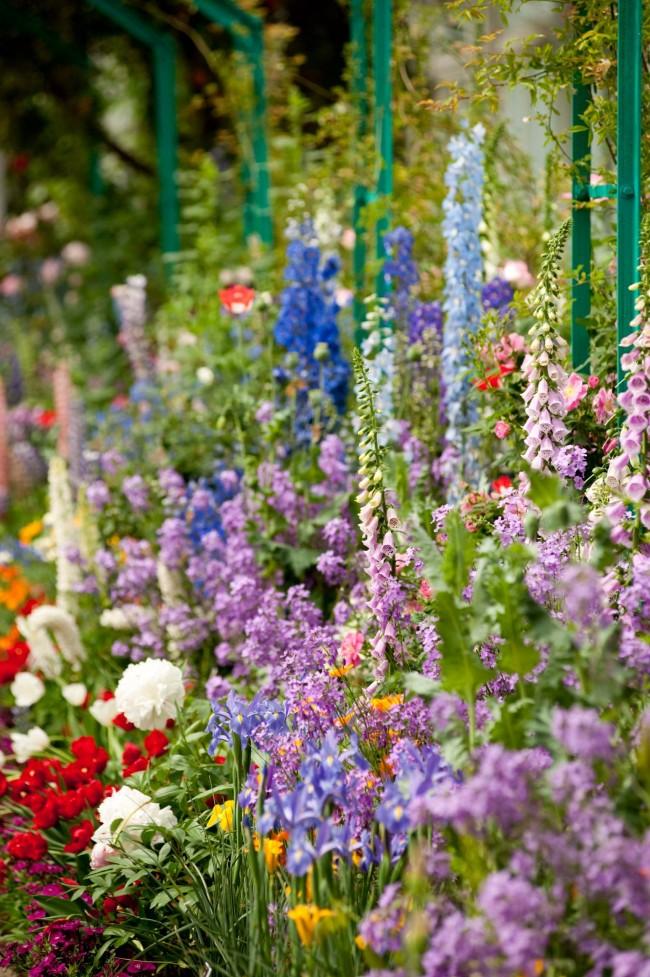 Jardin en couches de lupins, delphiniums, molène, pivoines et plus