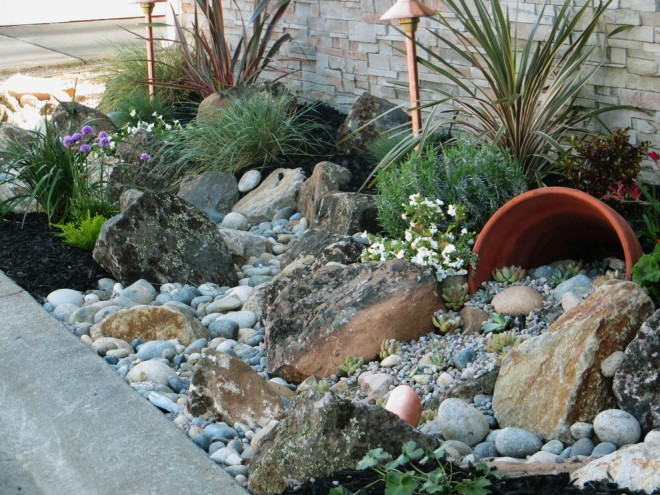 Les succulentes sans prétention sont parfaites pour décorer un ruisseau sec