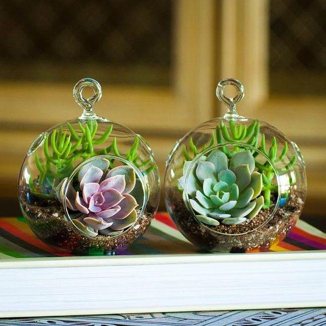 Petits florariums suspendus avec echeveria et arbre à monnaie miniature