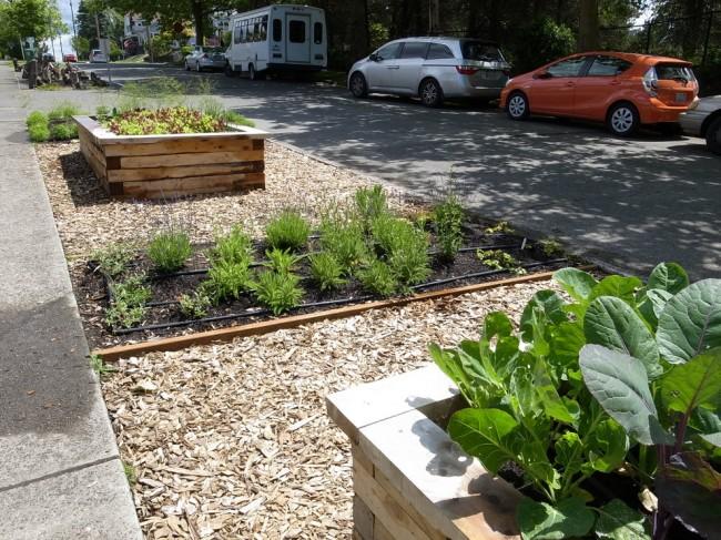 Lits de jardin : grands, intelligents, paresseux.  Le paillis est également utile pour combler les zones entre les lits.