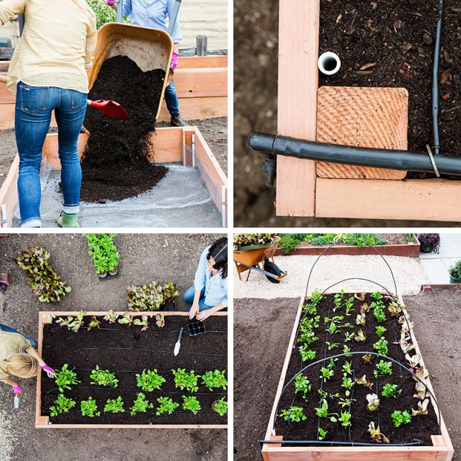 Lits de jardin : grands, intelligents, paresseux.  Lit de jardin paresseux à faire soi-même: étape 9-12 Nous remplissons le sol du type souhaité.  Nous fixons les tuyaux du système d'irrigation.  Nous plantons des semis.  Si nécessaire, installez les arceaux pour l'auvent