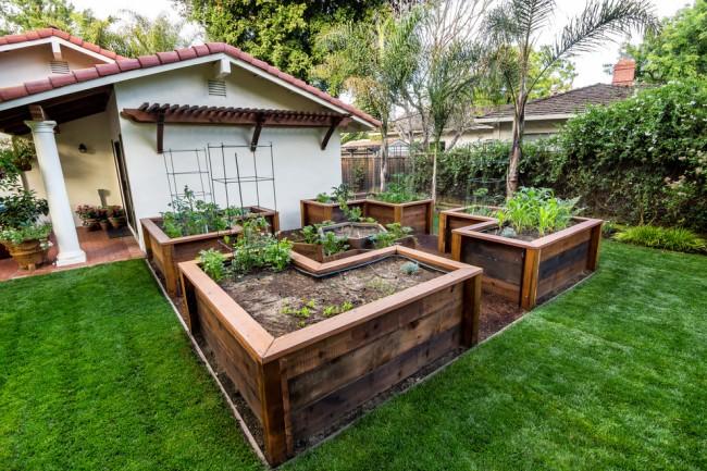 Lits de jardin : grands, intelligents, paresseux.  Les lits intelligents ne doivent être creusés qu'une seule fois.  Ils n'ont pas besoin de désherber - le paillis empêchera les mauvaises herbes de pousser