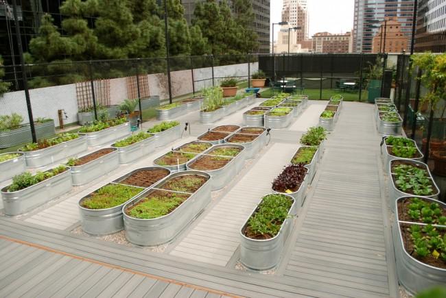 Lits de jardin : grands, intelligents, paresseux.  Fûts et conteneurs en aluminium de forme appropriée - matériau bon et facile à transporter pour créer des lits hauts