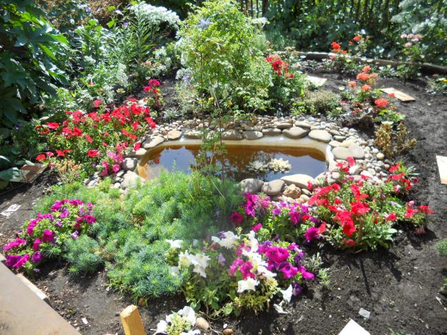 Un étang de jardin fabriqué à partir d'un bain creusé ou d'un autre de grande capacité a l'air moderne et élégant, si ses bordures sont recouvertes de cailloux