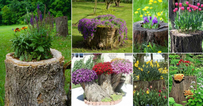 Il est même dommage de déraciner des souches centenaires pour leur donner une seconde vie en tant que pot de fleurs de jardin exclusif.  Vous pouvez également disposer des pots de fleurs pour pots dans des coupes de bûches et des souches déracinées et épluchées.
