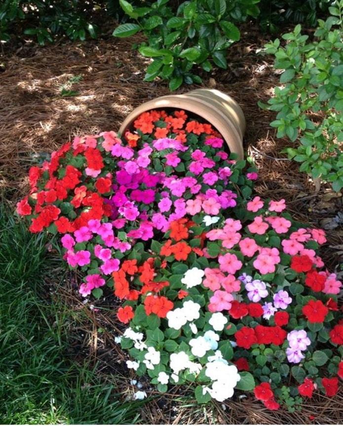 Parterre de fleurs en pot