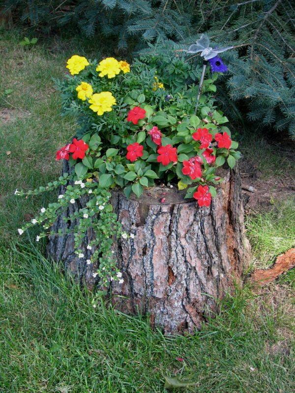 Fleurs dans la souche d'arbre
