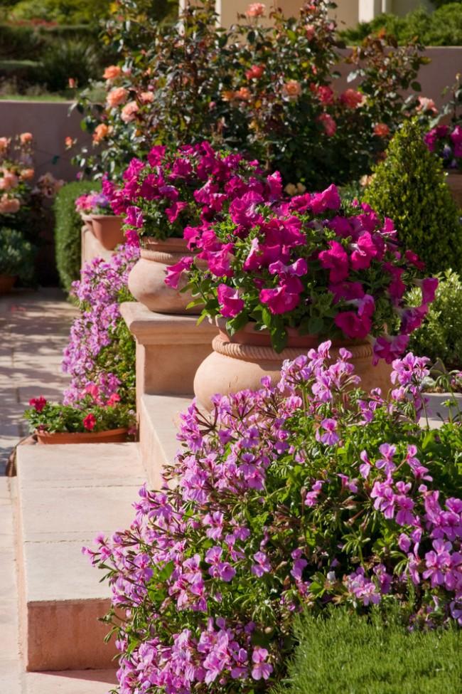 Une combinaison réussie de couleurs rendra votre jardin unique
