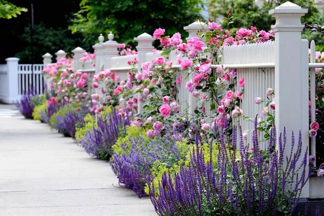 Une combinaison chic de jardin et de fleurs sauvages
