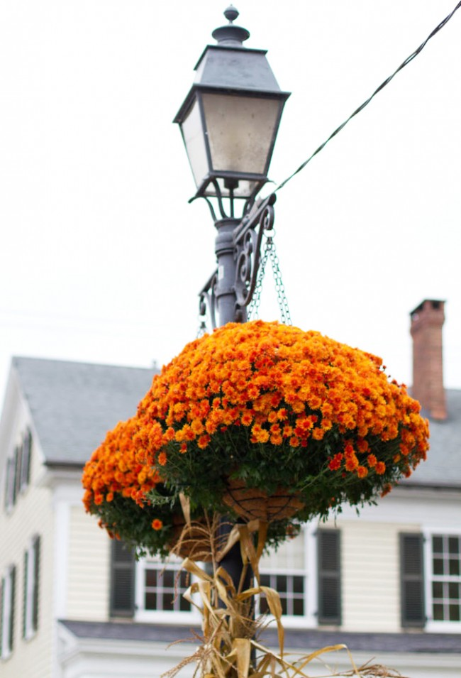 Pots suspendus avec des chênes