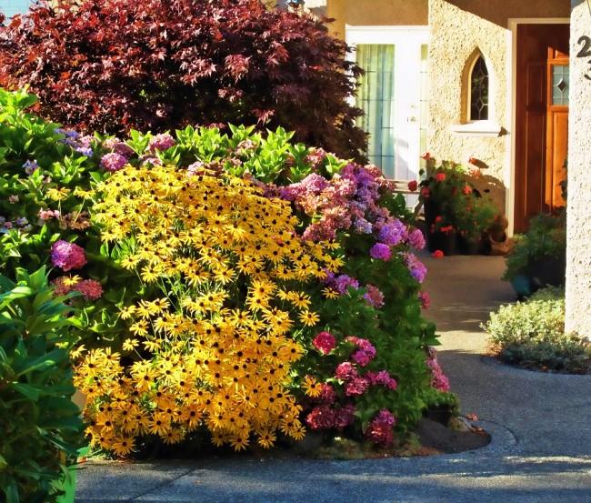Rudbeckia poilu dans une grande composition de jardin