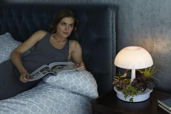 Mini-jardin ouvert dans la chambre à côté du lit.  Ici, la lampe sert également de veilleuse.