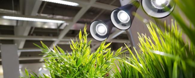 Des sources lumineuses supplémentaires correctement sélectionnées vous aideront à faire pousser des fleurs toute l'année