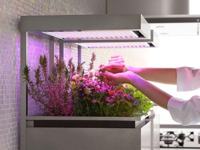 Avec le bon éclairage, nous pouvons prolonger artificiellement les heures de lumière du jour pour une plante.