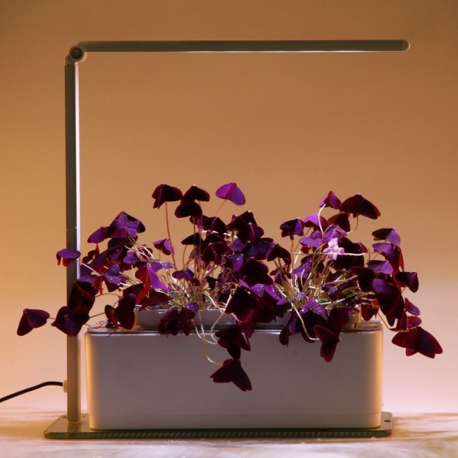 Éclairage compact pour les fleurs à la maison