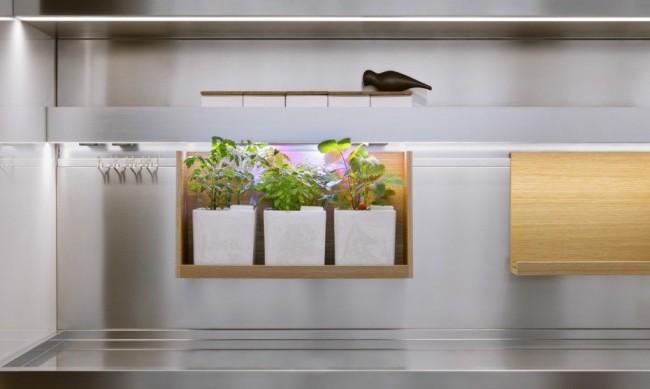 Niche végétale lumineuse égayant la cuisine moderne