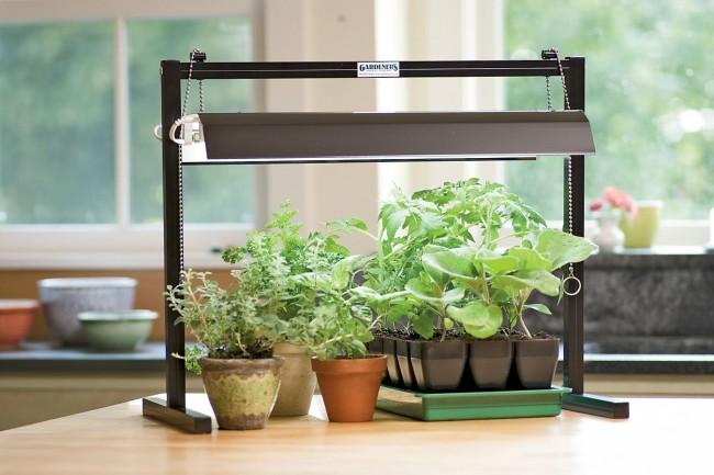 La lumière est presque la condition principale pour la croissance normale d'une plante.