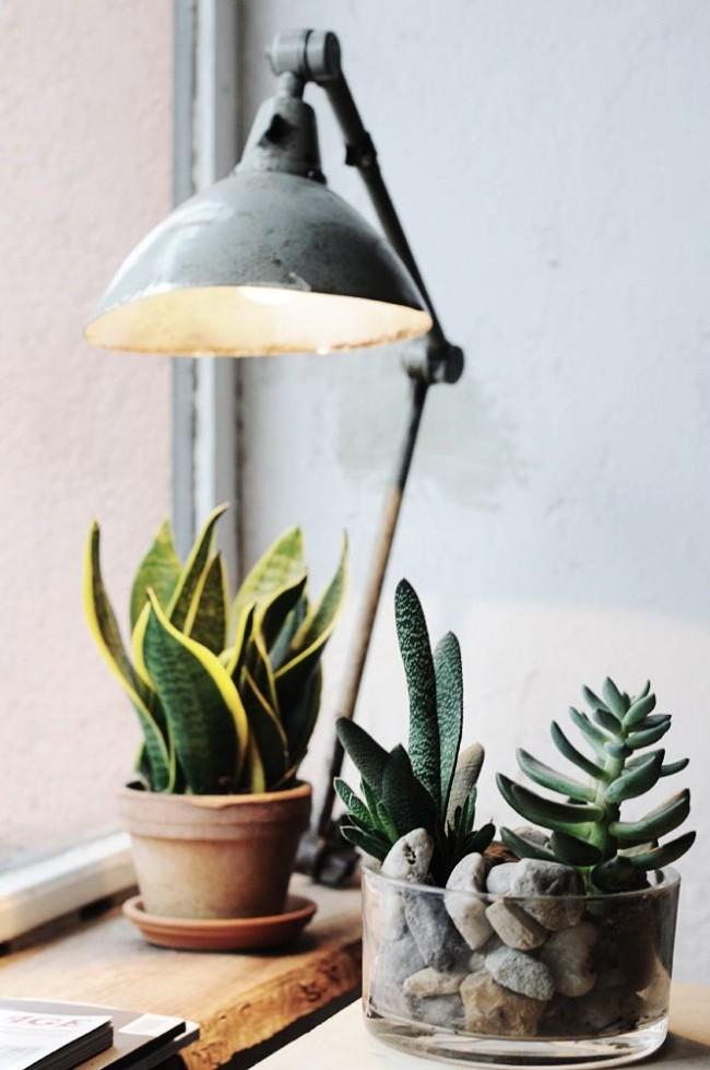 Lampe à incandescence pour l'éclairage des plantes d'intérieur
