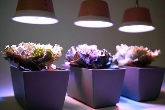 Lorsque les plantes sont situées avec un manque ou une absence de lumière naturelle, vous devez leur fournir une lumière supplémentaire provenant de sources artificielles.