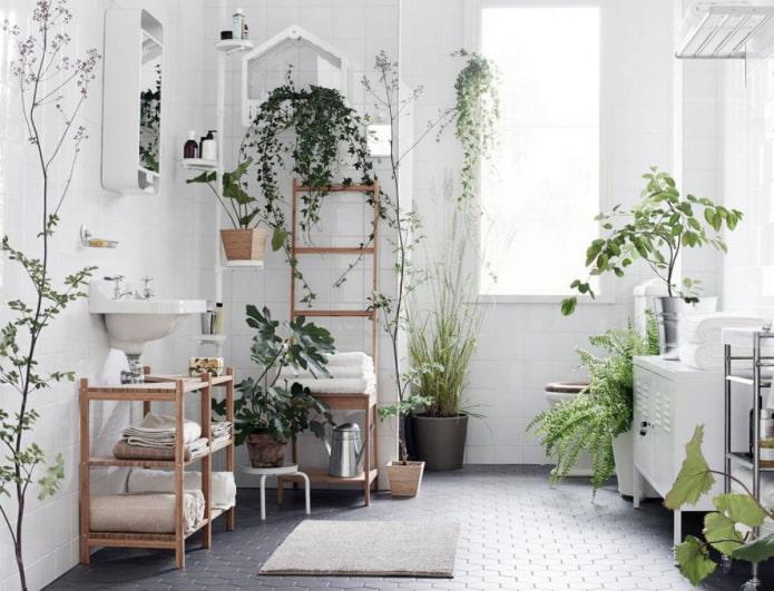 beaucoup de plantes dans la salle de bain