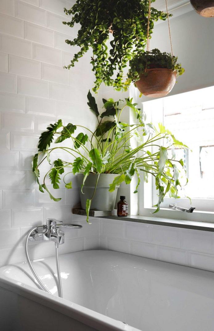 des fleurs au dessus de la salle de bain