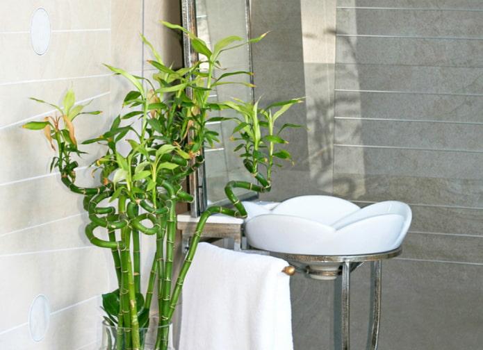 sansevieria pour salle de bain