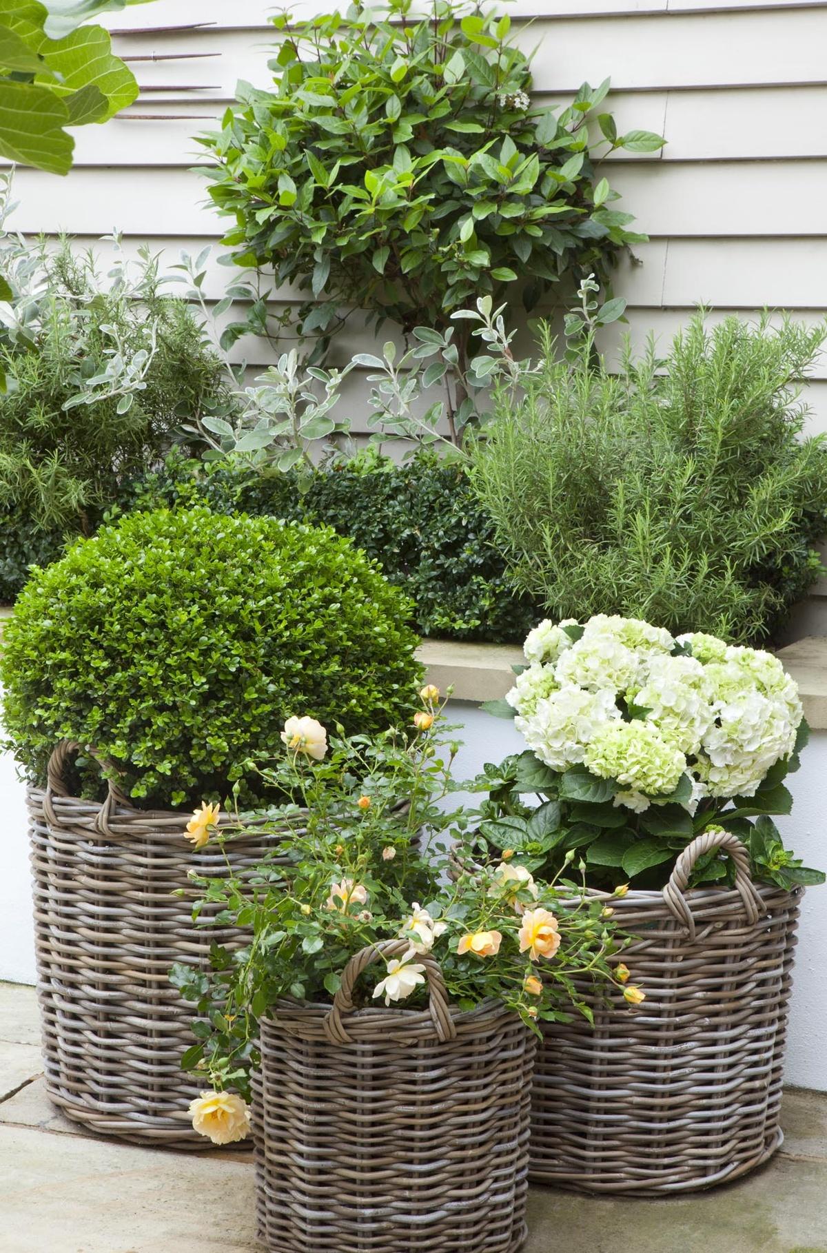 Les paniers en osier de la vigne souligneront l'ambiance romantique de l'aménagement paysager