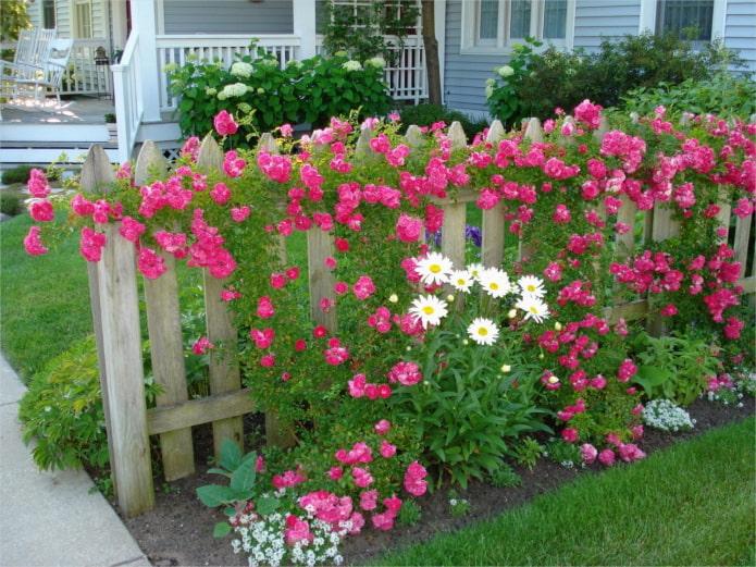 fleurs près de la clôture en bois