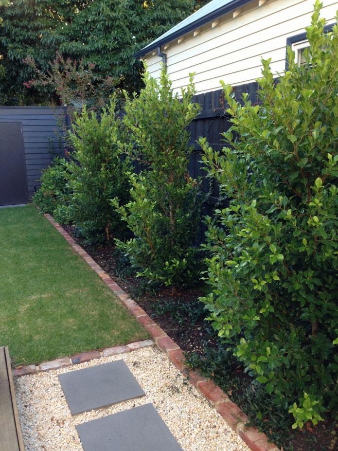 arbres bas pour le jardin