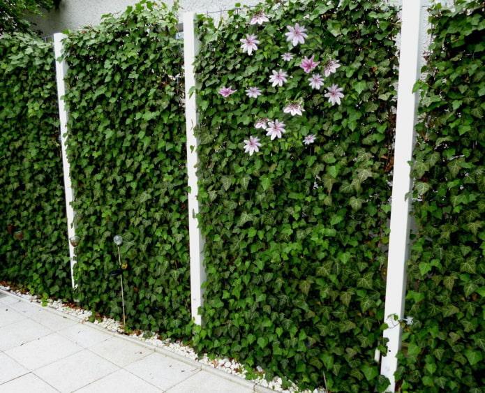 loche sur la clôture