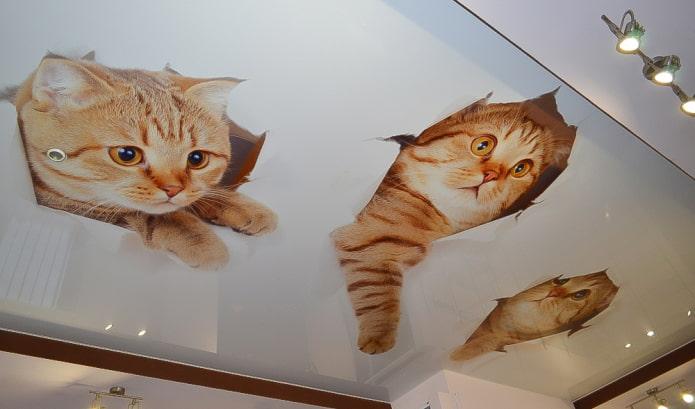 plafond avec une photo de chatons