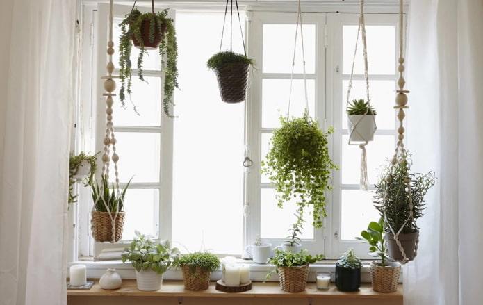 Plantes sur corniche rideau
