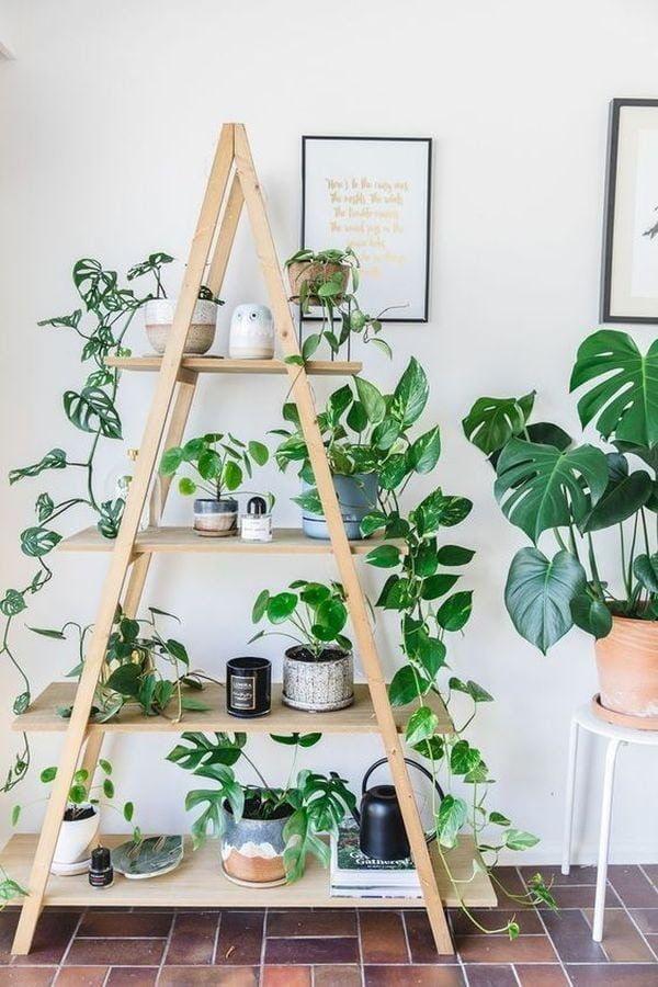 Plantes sur un support en bois