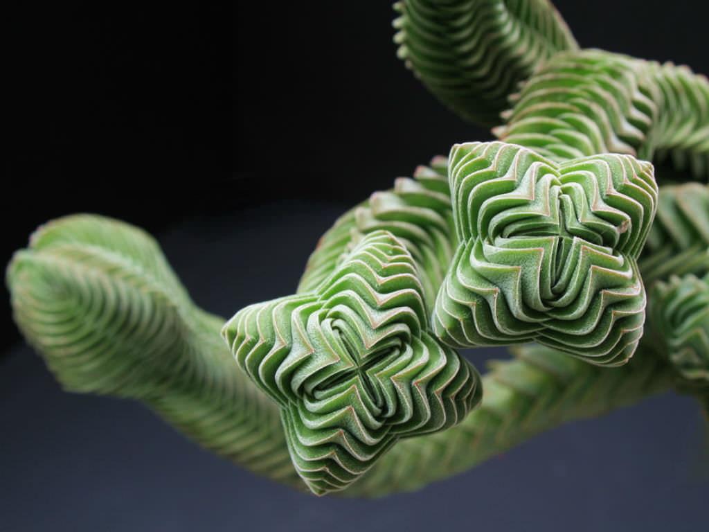 Plantes d'intérieur insolites