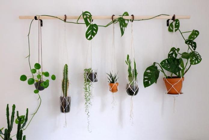 Plantes sur le mur de la corniche