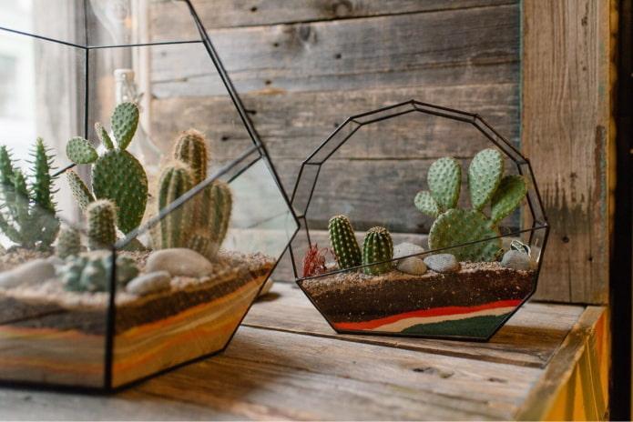 Cactus dans des conteneurs figurés