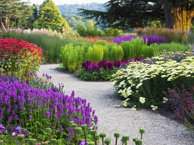 Les nuances de fleurs de lavande vont du violet foncé au bleu foncé