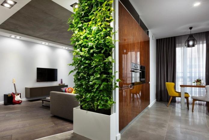 plantes comme cloison à l'intérieur de la cuisine-salon