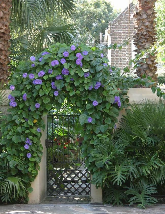 Décoration florale du portail d'entrée
