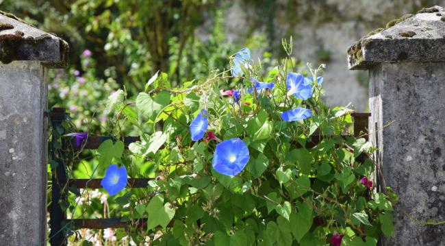Les bonnes conditions pour planter des graines ou des semis en pleine terre vous permettront de profiter longtemps de la floraison.