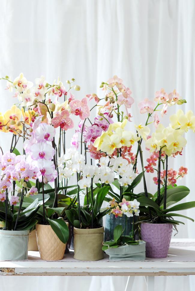 Des orchidées incroyablement belles dans des pots en céramique