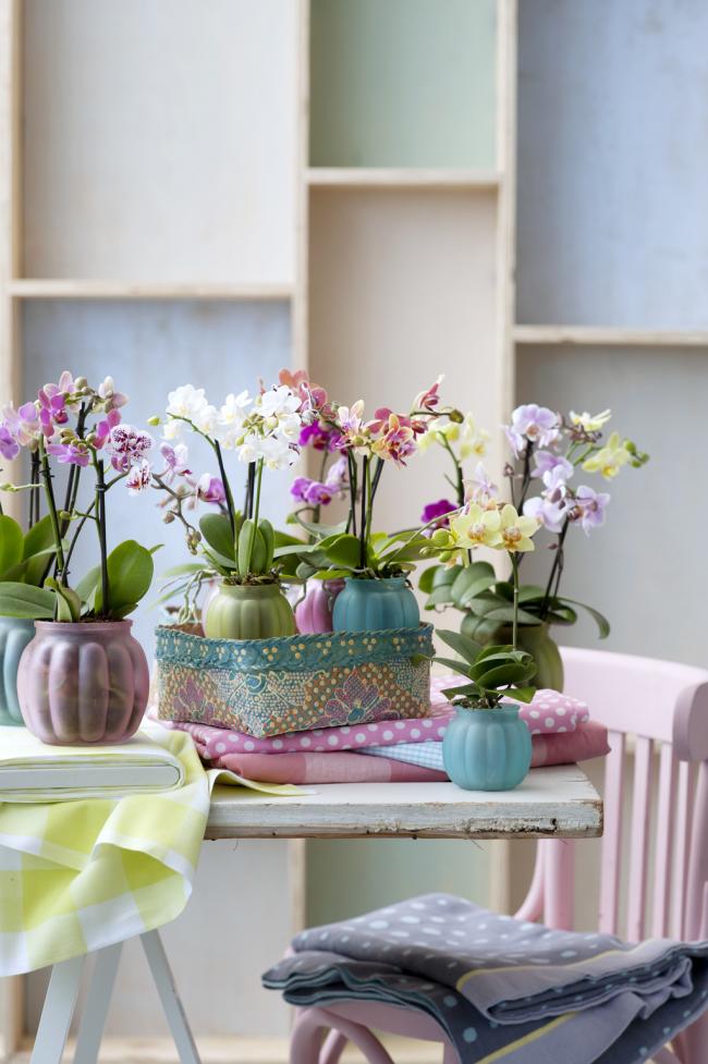 Pots d'orchidées en plastique givré translucide très mignon