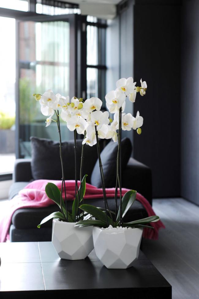 Pots d'orchidées en plastique blanc sous forme de polyèdres irréguliers